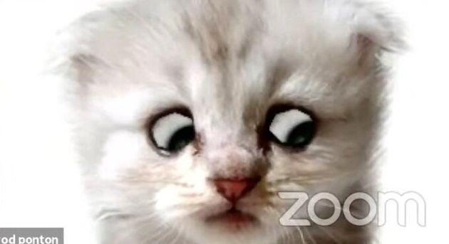 「私は猫ではありません」Zoomで猫フィルターを外せなくなった弁護士、裁判で大真面目の釈明