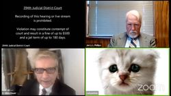 Attorney In Texas Can't Remove Cat Filter On Zoom Court