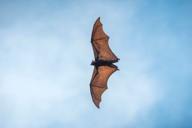 Κοντινός «συγγενής» του κορονοϊού εντοπίστηκε σε νυχτερίδες στην