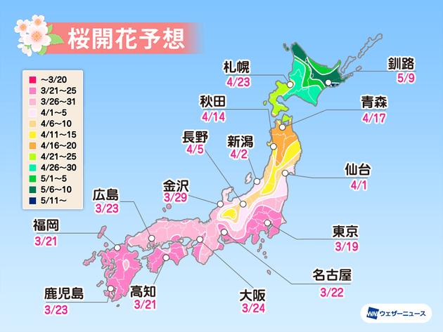 桜開花予測