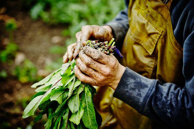Bandi e banditi nell'agricoltura