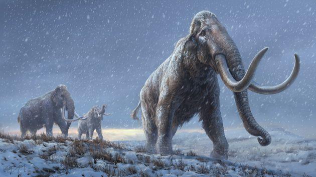 En séquençant l'ADN de mammouths vieux de plus d'un million d'années, les chercheurs ouvrent la voie...