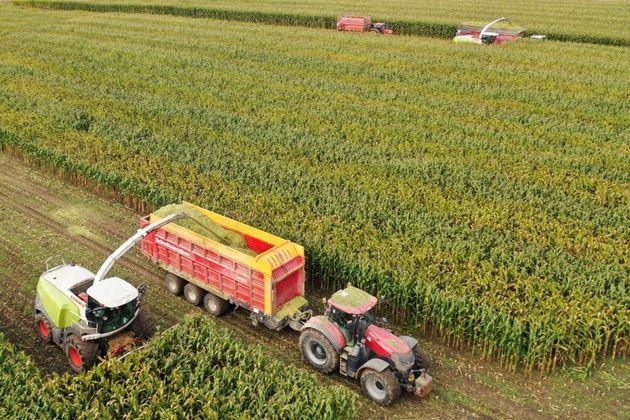 Le lien entre pesticides et leucémie aiguë prouvé par des