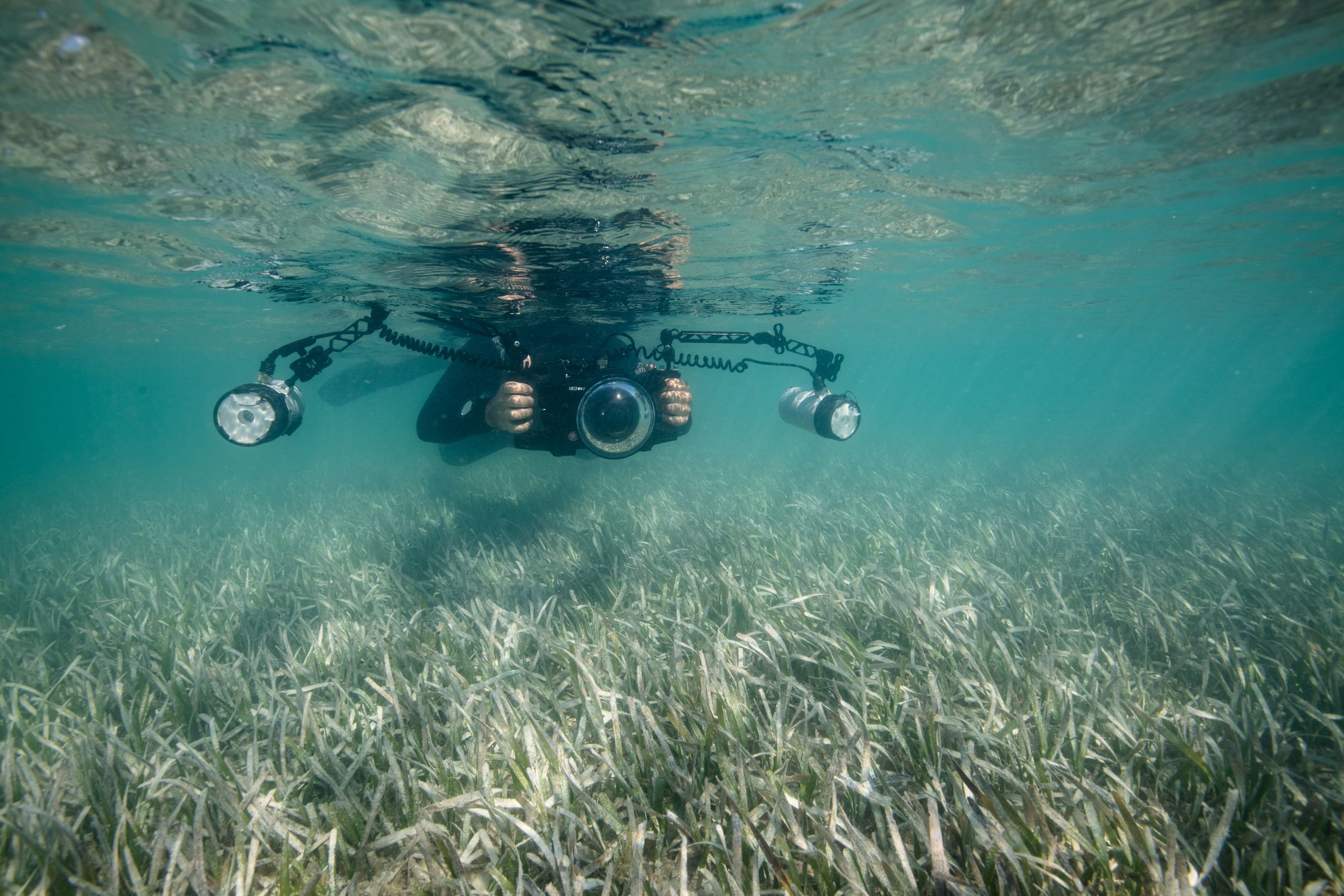 Ian Segebarth photographs a seagrass meadow composed of turtle grass in the Lignumvitae Key Aquatic Preserve.