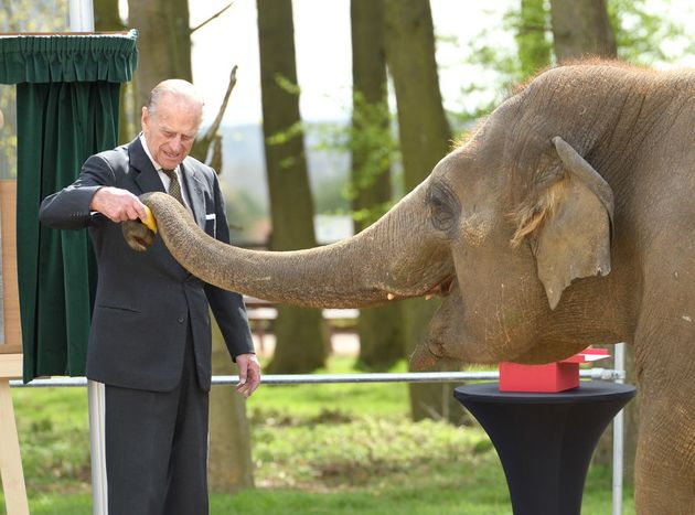 El duque de Edimburgo, en abril de 2017, alimentando a una elefante durante la inauguración del...