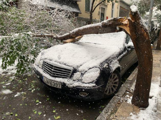 Πτώση δέντρου στην οδό Νίκης στο Κέντρο της