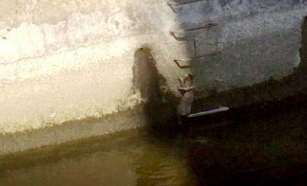 神田川の護岸に取り残された猫==2021年2月20日、川村貴大撮影