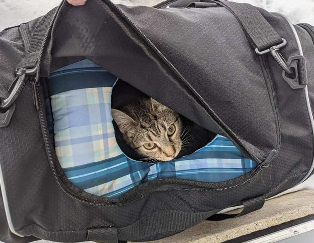 見つかった1匹の親ネコ