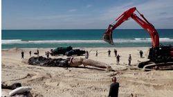 Israel Closes Mediterranean Beaches After Oil Spill Devastates