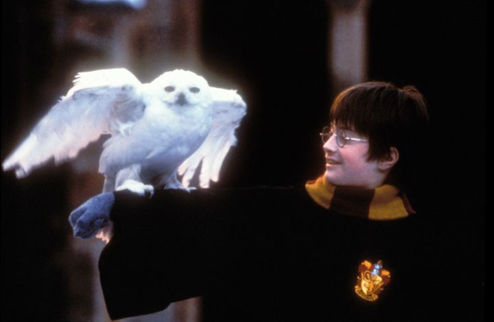 "Daniel Radcliffe in ""Harry Potter And The Sorcerer's Stone."""