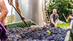 Il vino naturale, una questione di