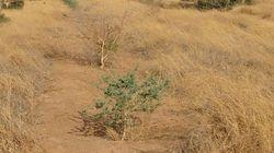 Grande Muraglia Verde africana, un progetto che stenta a