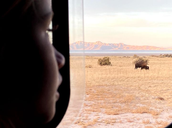 The author's 6-year-old woke her up one morning in November 2020 to point out bison in their campsite on Antelope Island in Utah.