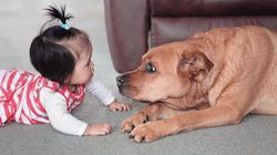Here's How The Top Pet And Baby Names