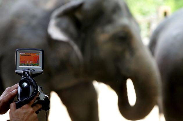 Πώς 30.000 «selfies» ελεφάντων μπορούν να σώσουν το