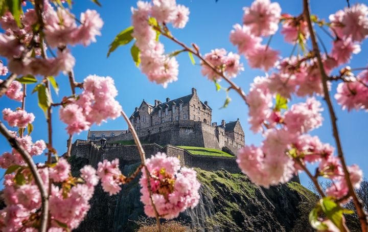 Edinburgh Castle is framed by cherry blossom in Princes Street Gardens.