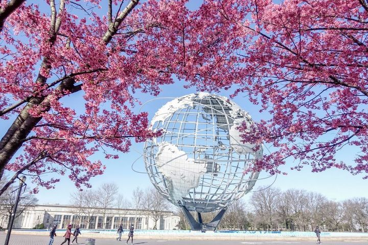Cherry blossoms near the Unisphere at Flushing Meadows-Corona Park in New York City.