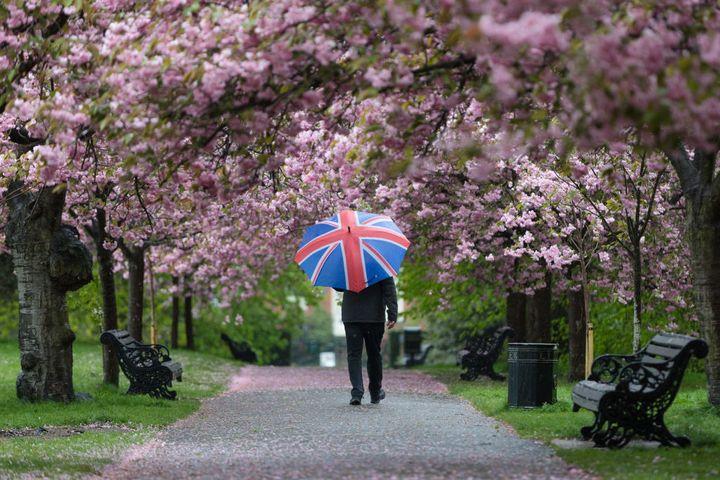 A canopy in Greenwich Park, London.