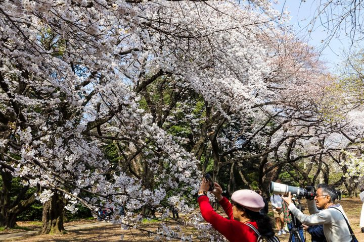 Shinjuku Goen National Garden in Tokyo, Japan.