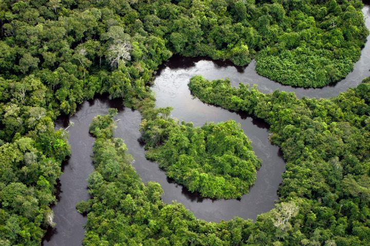 Les terrains de la forêt amazonienne vendus sur Facebook sont détenus illégalement.