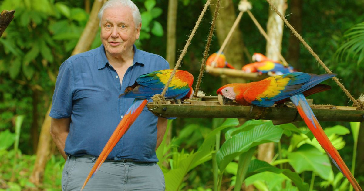 David Attenborough's Life In Colour Fulfils The Broadcaster's Lifelong Wish