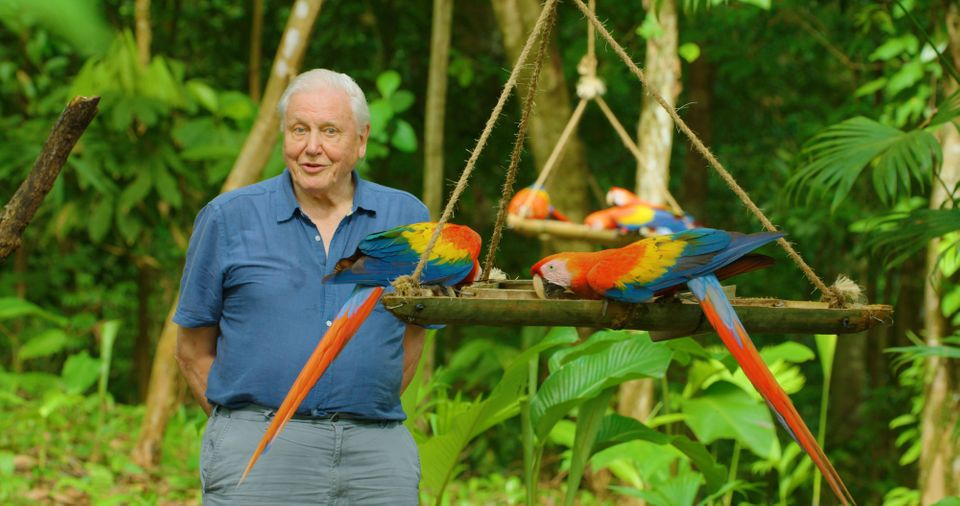 Sir David Attenborough on location with macaws in Costa