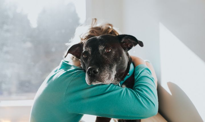 Un perro con su dueño.