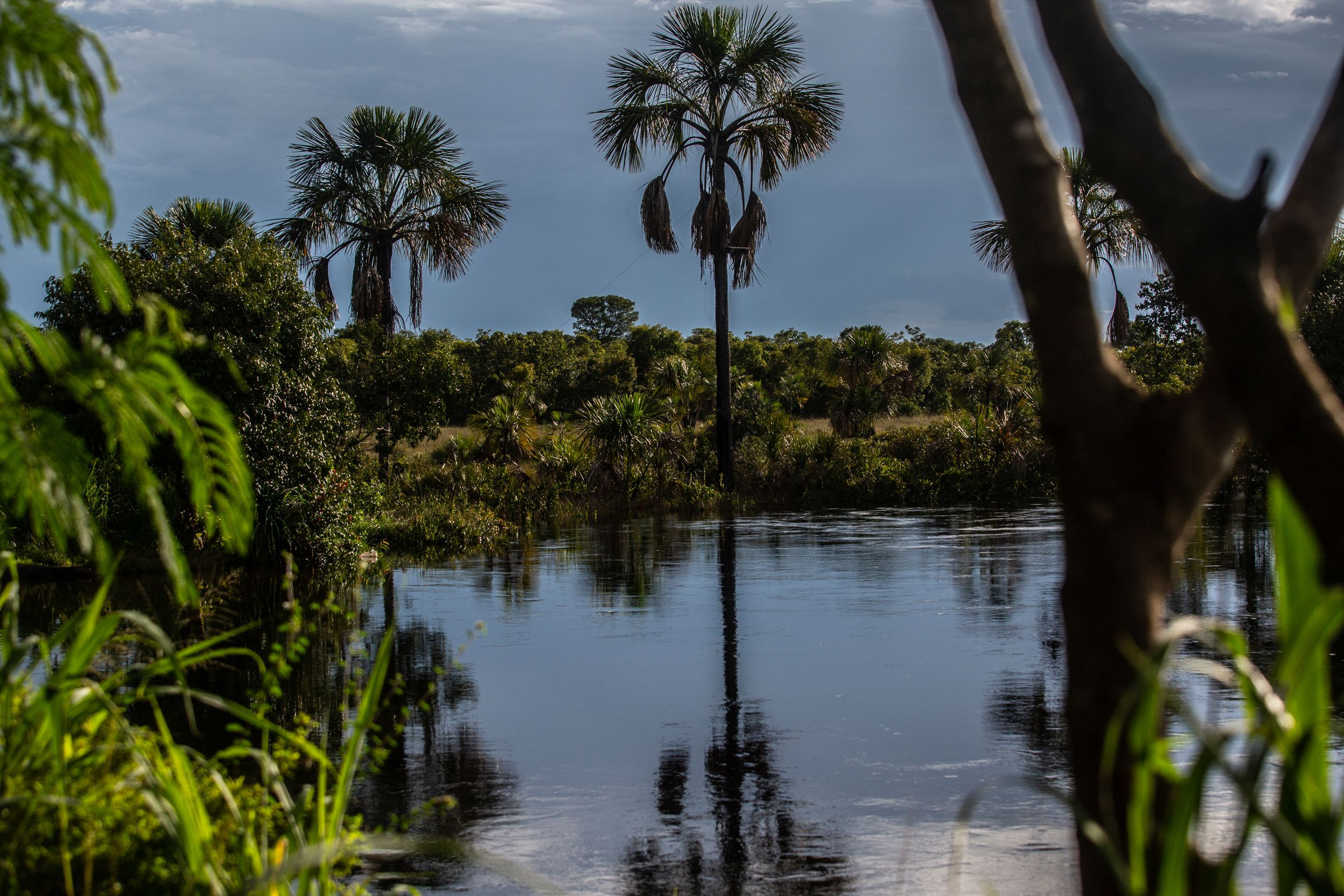 A typical swampy area in the Cerrado, fed by rainwater and the Urucuia aquifer in Bahia state.