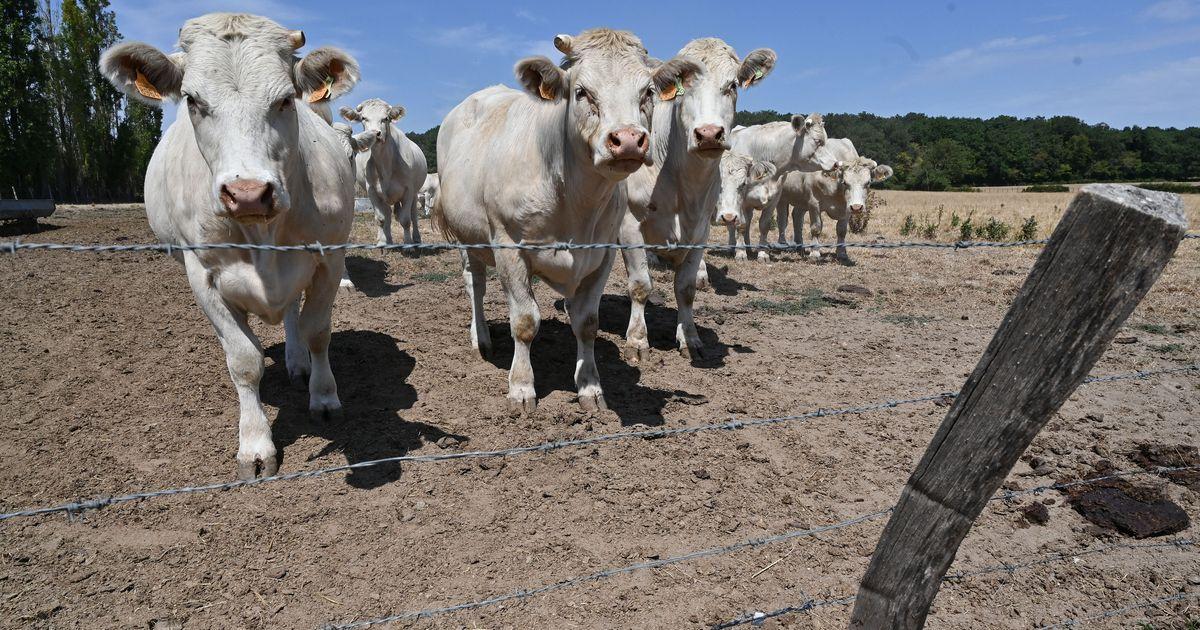 Comment les farines animales sont revenues dans les assiettes françaises