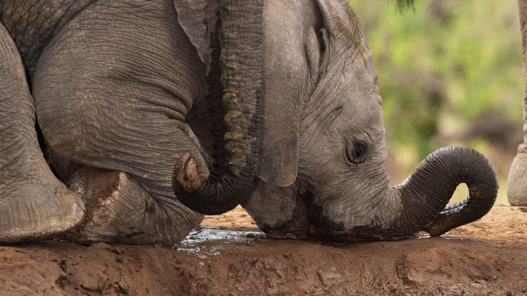 Ontario Zoo Dubbed North America's Worst Zoo For Elephants