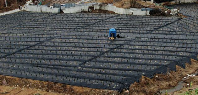LH직원들이 사들인 뒤 묘목을 심어 놓은 경기도 시흥시 과림동 소재 농지의