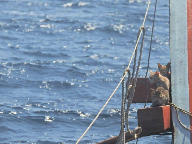 甲板の上で身を寄せ合うネコたち。心細そう