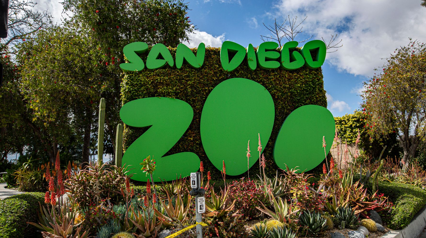 Great Apes At San Diego Zoo Become First Of Their Kind To Receive COVID-19 Vaccine