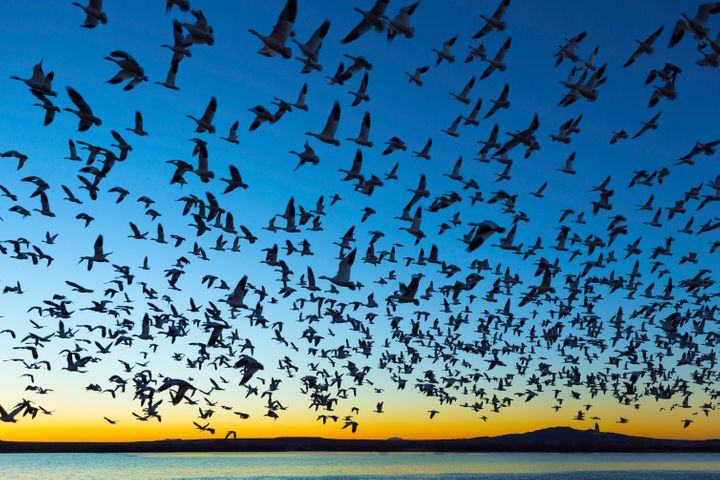 The Biden administration delayed a rule that gutted protections for migratory birds from taking effect last month, and the In