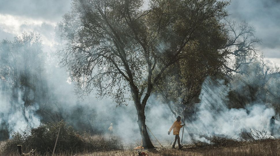 Smoke lingers among the oak trees after two large brush piles were burned. Fire smoke also has a purpose in traditional Nativ