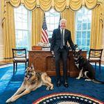 Τα λυκόσκυλα του Μπάιντεν επέστρεψαν στο Ντέλαγουερ - Δάγκωσαν άντρα της