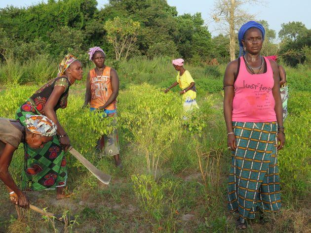 Mujeres africanas, en el sur de Senegal, en una de las huertas comunitarias apoyadas por Alianza por...