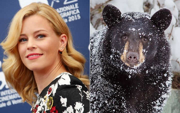 """While the exact details of Elizabeth Banks' """"Cocaine Bear"""" film are being kept under wraps, it's apparently based"""