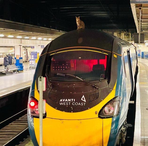 영국에서 고압 전선이 깔린 열차 위에 올라간 고양이를 구출하려고 모든 승객이 하차하는 대소동이