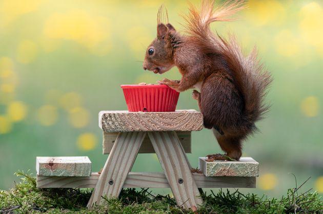 Introducing Squirrelman, The Amateur Snapper Taking Amazing Squirrel Pics