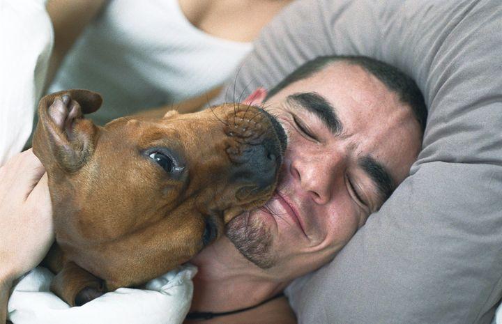 Perro lamiendo a su dueño.