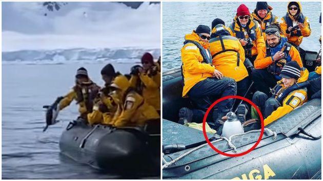 ペンギン危機一髪。シャチに追われ、観光客のボートに飛び乗る