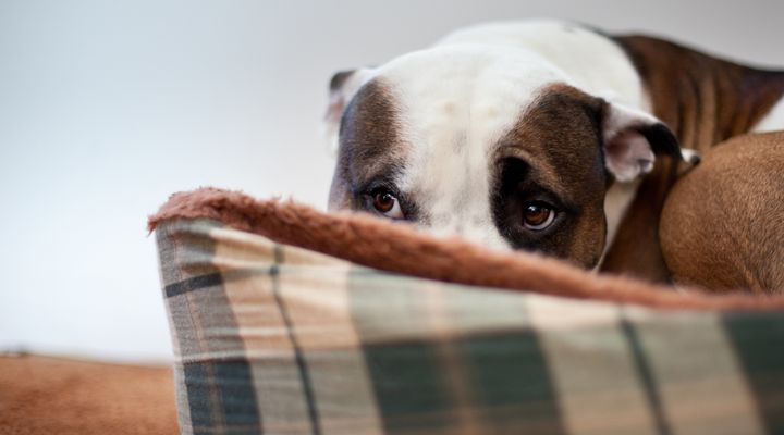 It's important to be prepared to address your and your pet's needs when natural disasters arise.