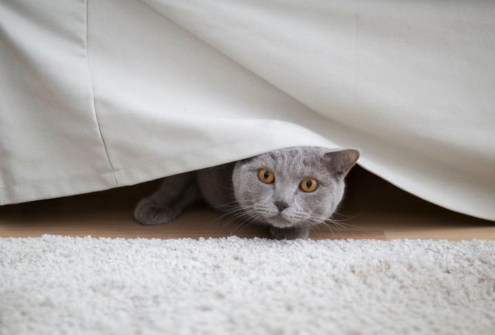 It's important to keep an eye on pets if you're sheltering in place. Noises and other sensory aspects of a natural disaster can cause them to feel overwhelmed and confused.