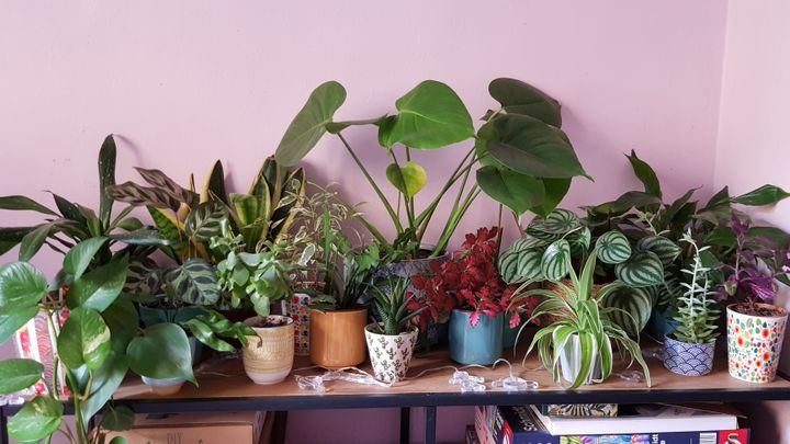 Cathie's plant collection is ever-growing.