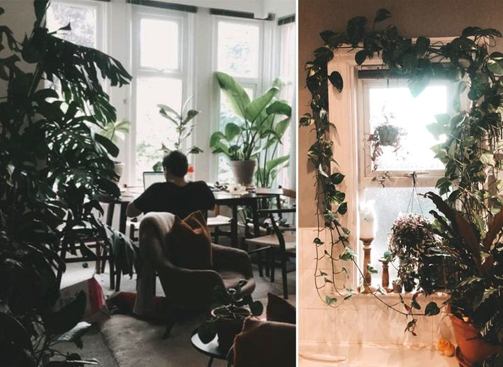 Left: Jacob surrounded by plants in his living room. Right: plants creep around the windows of his bathroom.