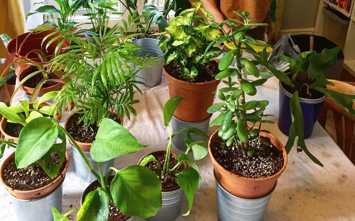 Connor Prestwood's growing plant collection.