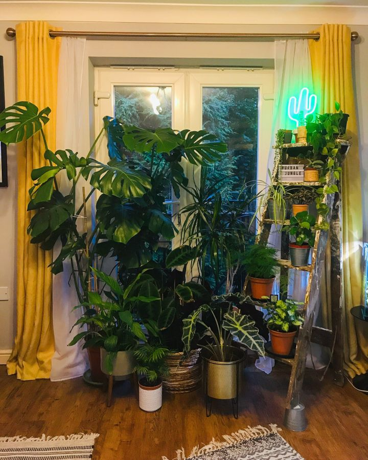 Connor's living room is teaming with plant life.
