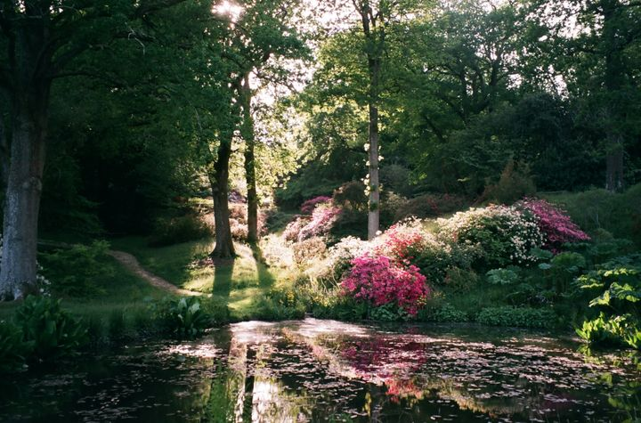 """This was taken during an evening walk in May 2020 at High Beeches Gardens in Sussex. The garden is usually open to the public but was closed at that time. It looked so beautiful, I felt sad no-one else was able to appreciate it, but realised how lucky I was to have it all to myself. I will always remember it because in that moment, the garden was looking so magical and tranquil, I was able to forget about the difficulties of lockdown and just enjoy it."" – Emily Bray, 29, West Sussex."