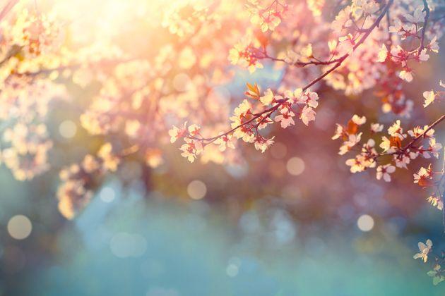 È primavera: alle 10:37 l'equinozio. Comincia la nuova